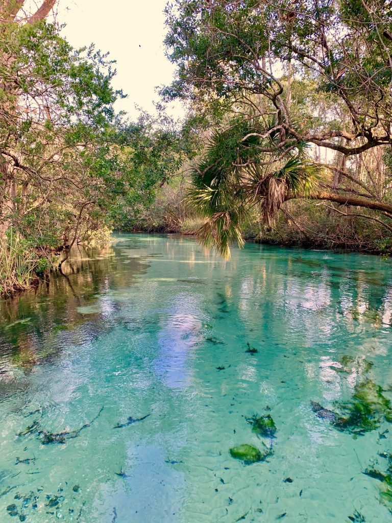 The 5 BEST Natural Springs Near Orlando