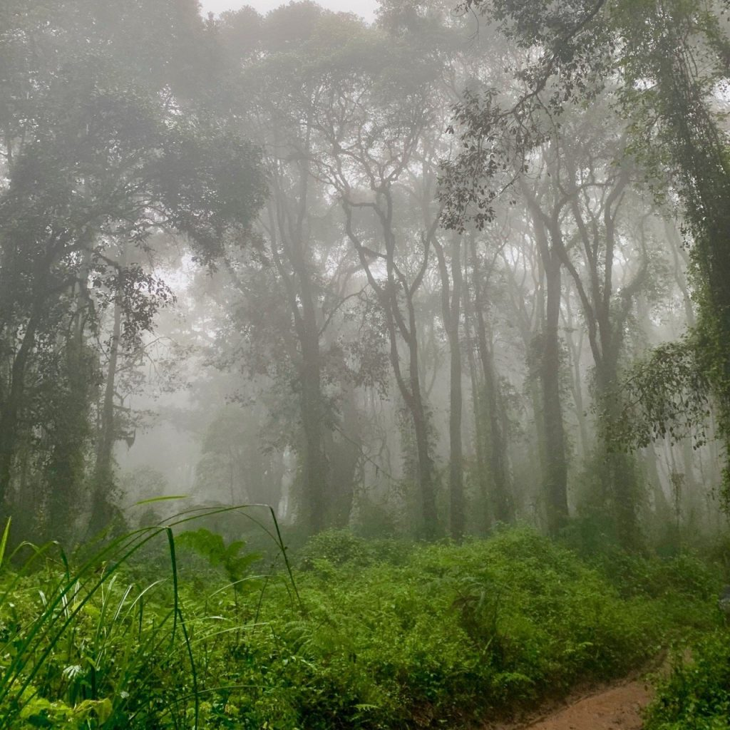 The foggy rainforest portion of the hike from Mweka camp to the gate.