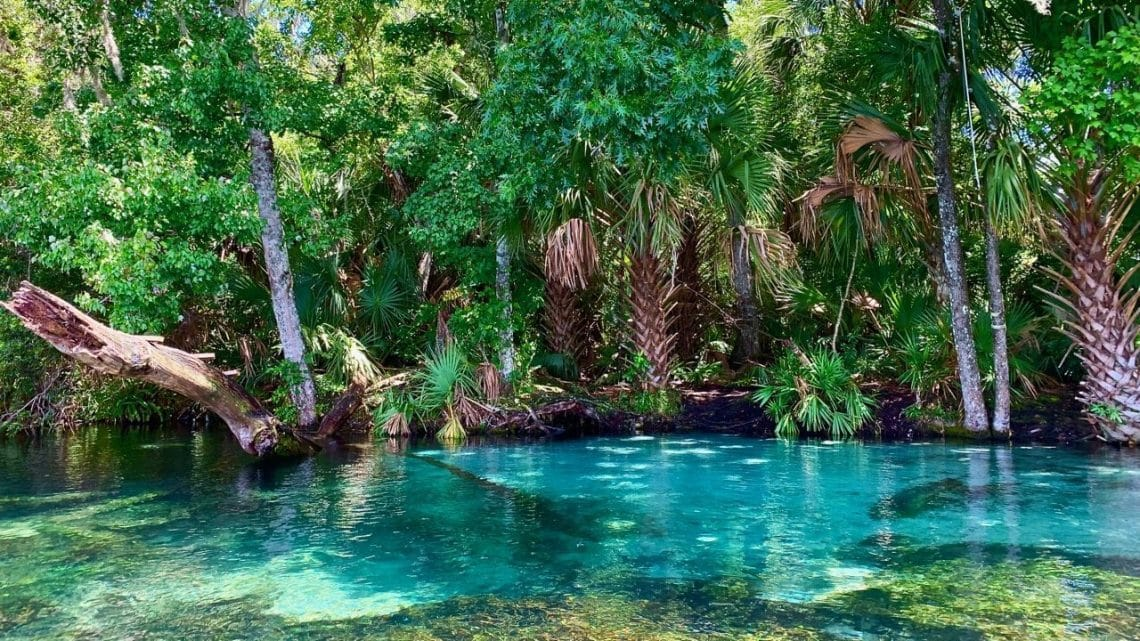 The dark blue deeper waters of Rainbow River, a natural spring near Orlando.