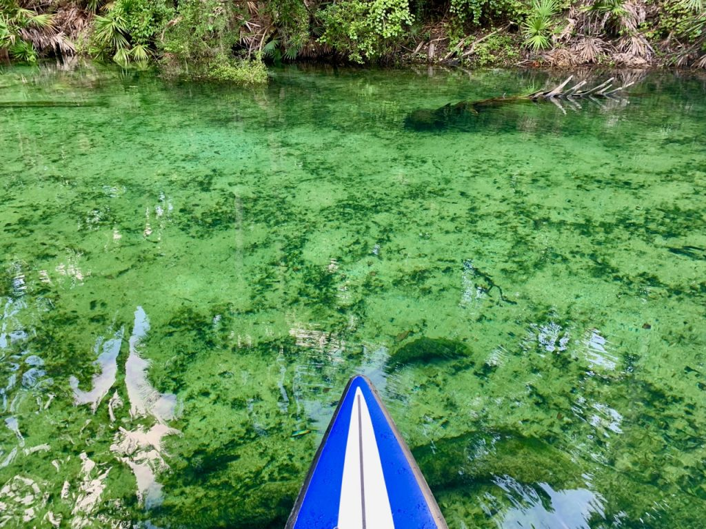 Crystal clear water while kayaking Blue Springs